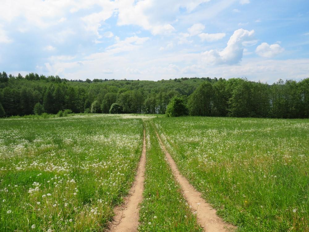 pathway between green grass during daytime