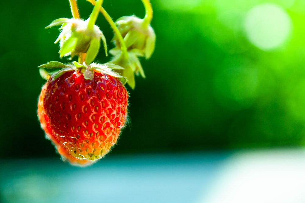 focus photography of red strawberry
