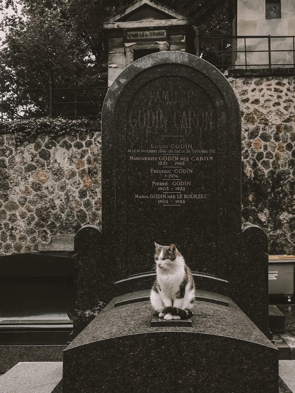 girl sitting on tombstone