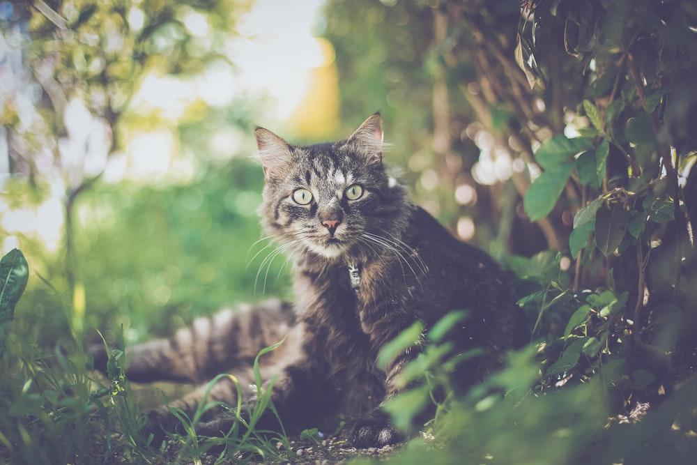 selective focus photography of brown cat beside green plants during daytime
