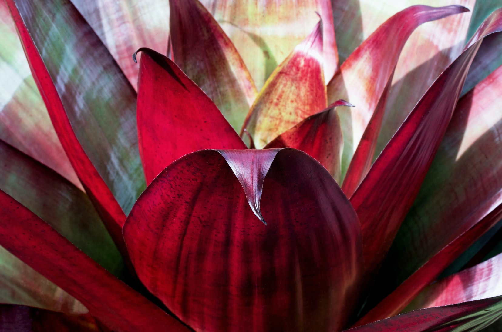 Bromeliads, an indoor tropical plant jungle must-have.