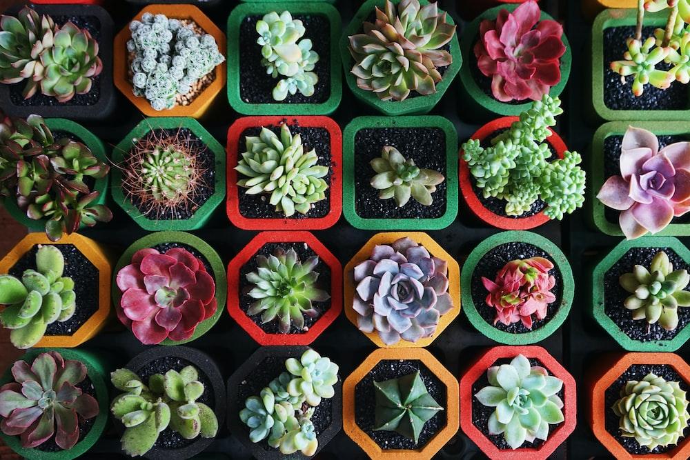 assorted-color succulent plants