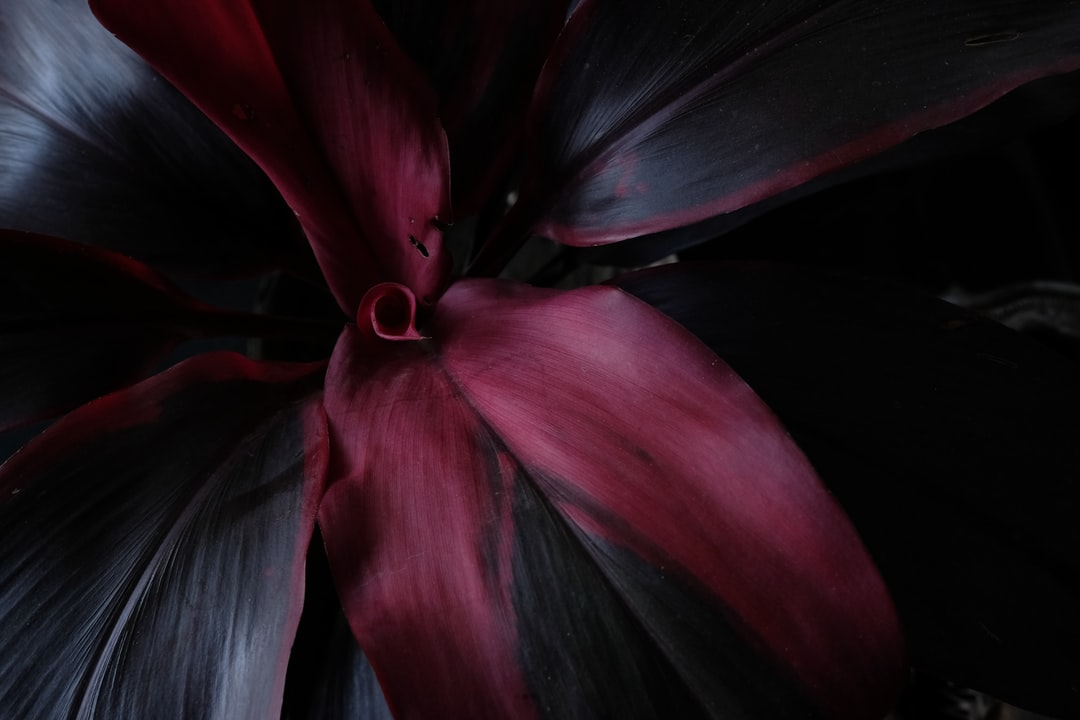 Just loved the velvety smooth gradients on this plant outside my house. Also: yay! first post! :D