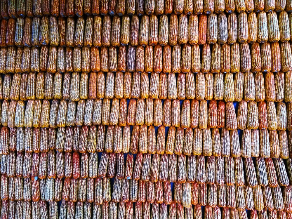 grilled corns
