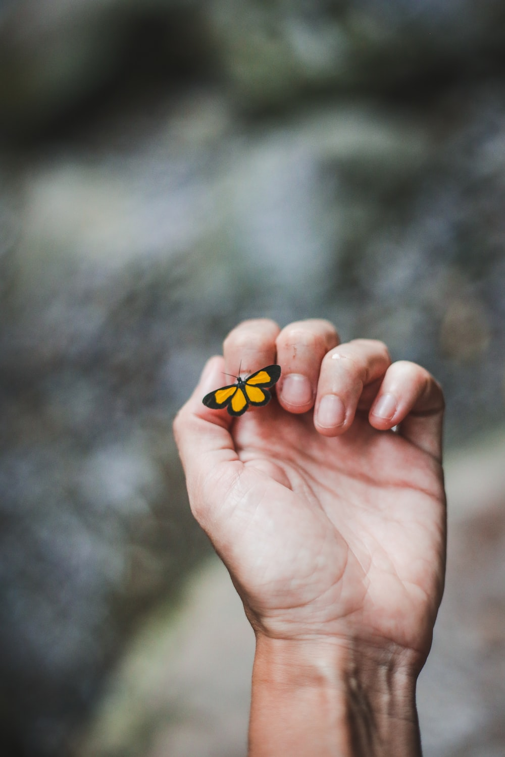 yellow butterfly on person's index finger