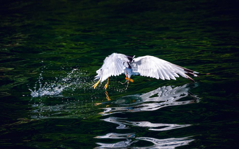 white bird near body of water