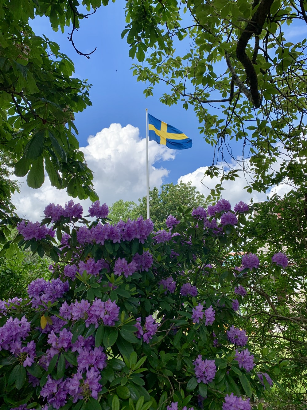 blue flag with yellow cross in the middle near purple flower bushes