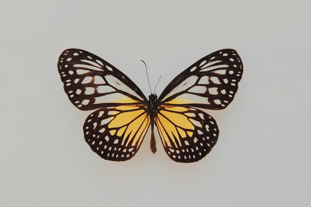 Butterfly Wallpapers Free Hd Download 500 Hq Unsplash Aesthetic butterfly wallpaper vsco image information: butterfly wallpapers free hd download