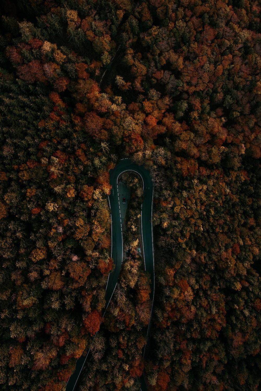 bird's-eye photography of trees beside road