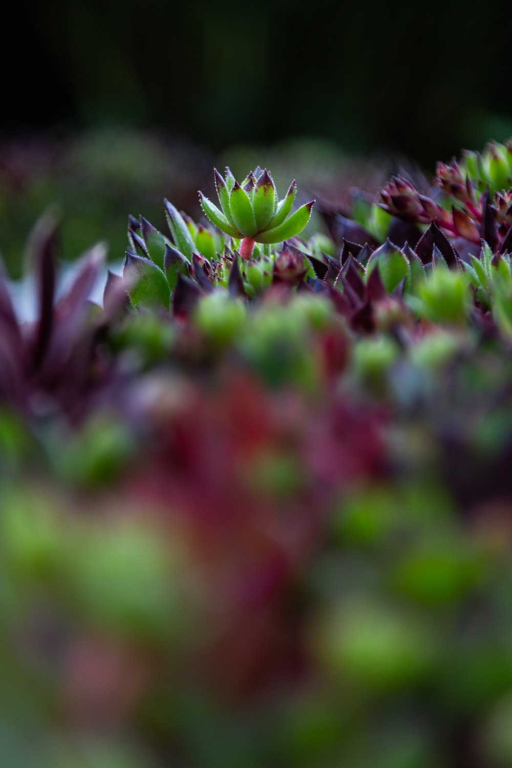 selective focus photography of succulent plant