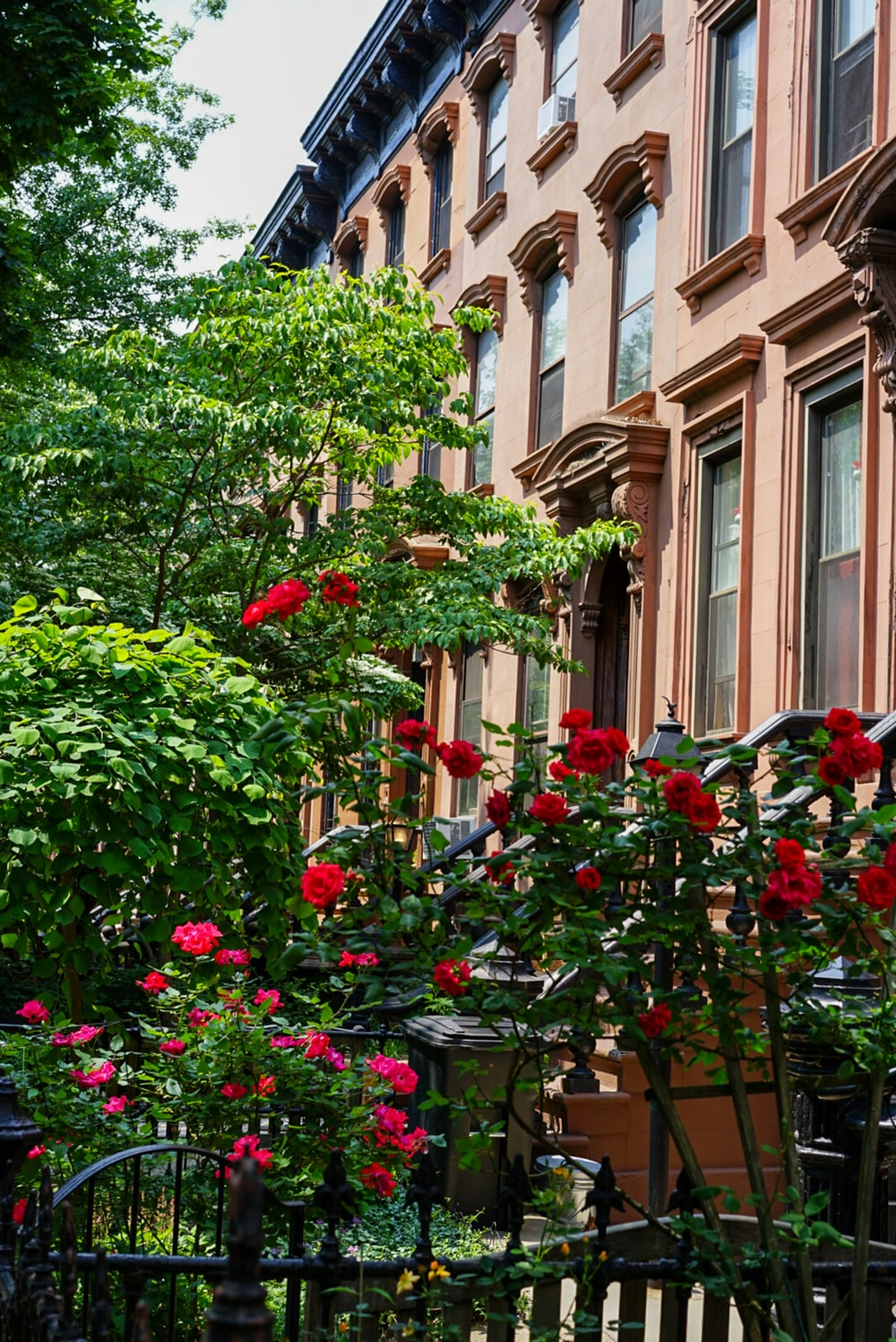 red flowers near building