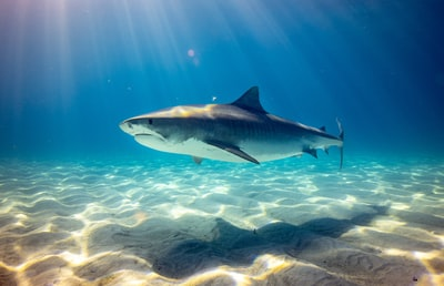 black shark underwater photo shark zoom background