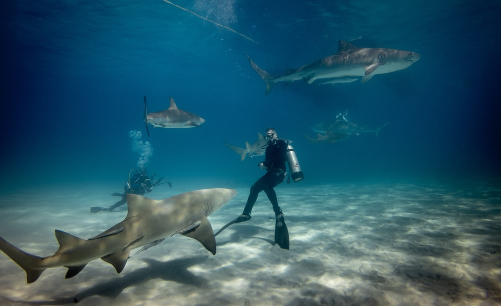man diving underwater with sharks