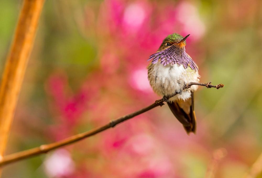 bird perched on twig
