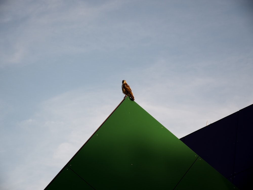 bird perched on green pyramid during day