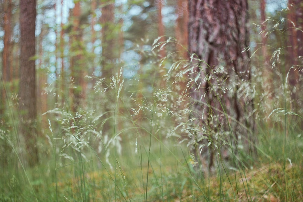 flowering grass under the trees