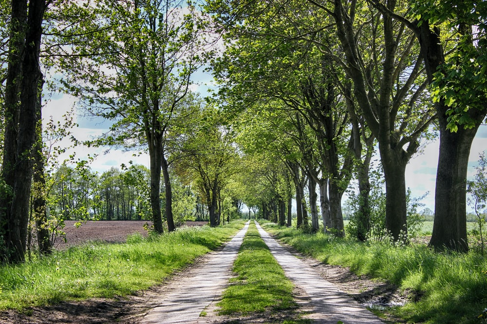 tree lined dirt road