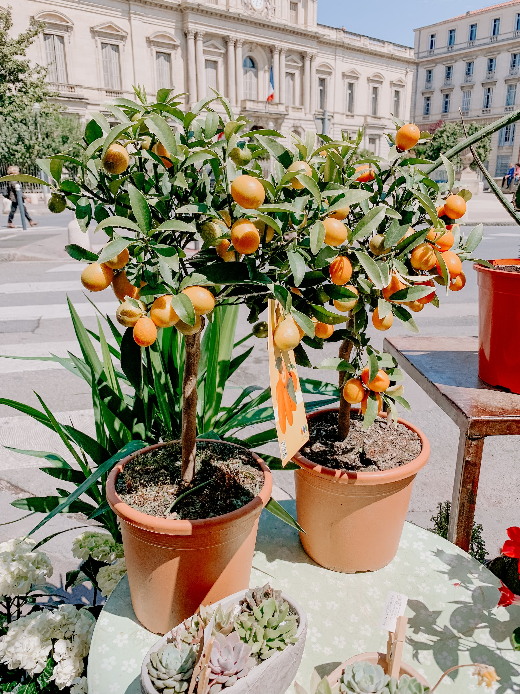 What Kind Of Soil Do Kumquats Like