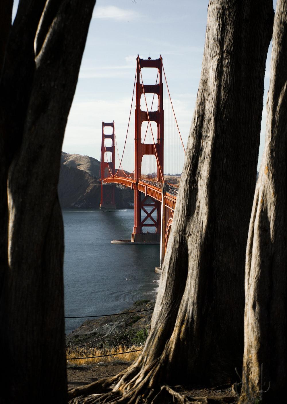 concrete bridge during daytime