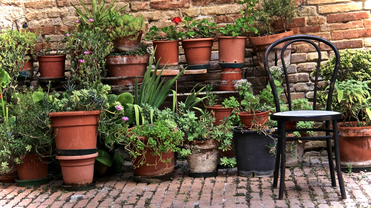 tips for cleaning gardening pots