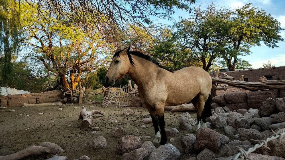 brown horse cub