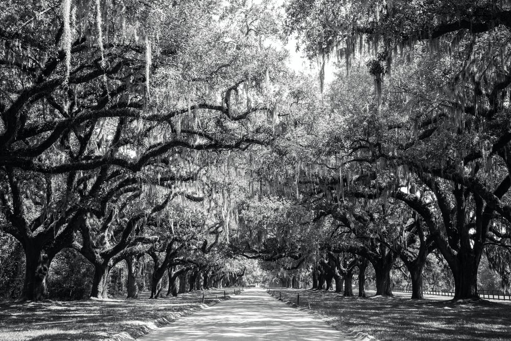 grayscale photography of road path surrounded with trees