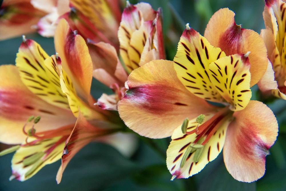 shallow focus photography of orange and yellow flowers