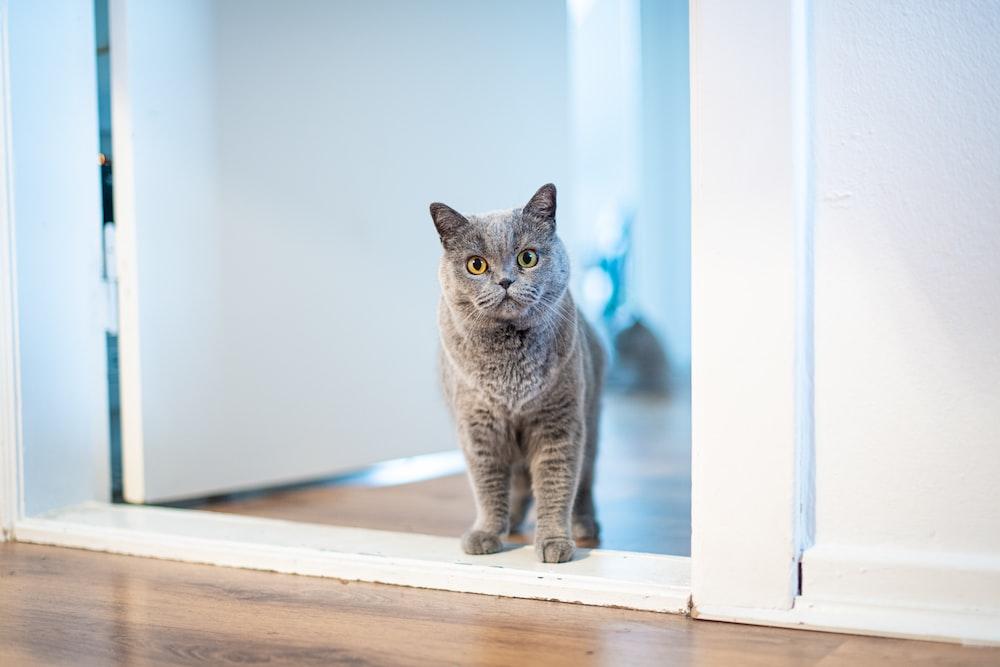 long-fur brown cat standing near opened-door door