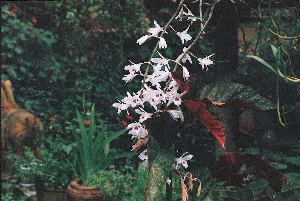 white petaled flower plants near plants