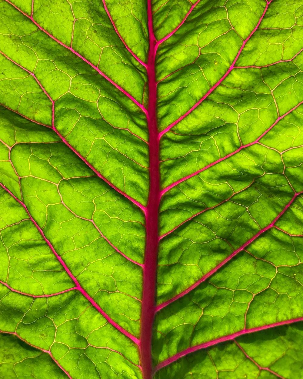 green spinach leaf