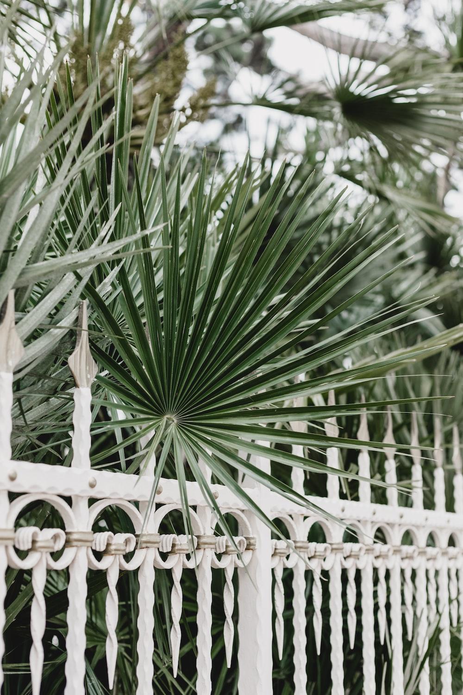 green plants beside fence