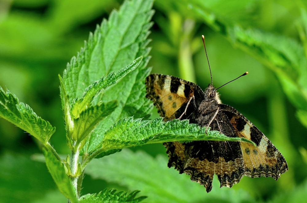 back and yellow butterfly near green leafed plant