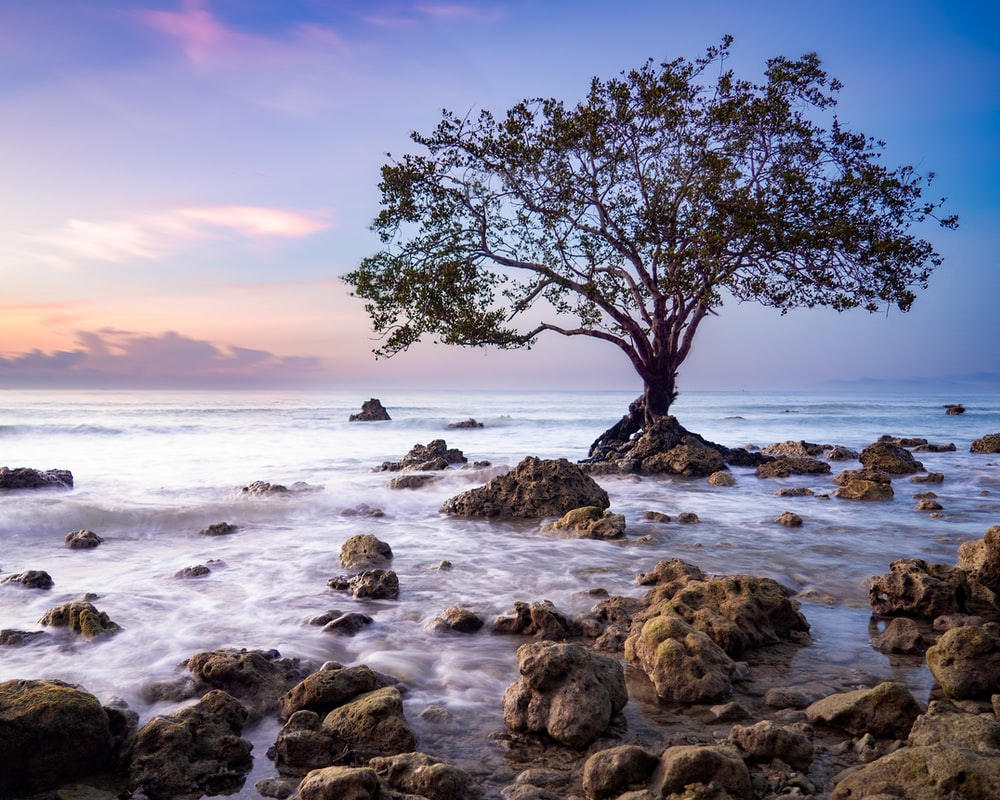 green tree and seashore scenery