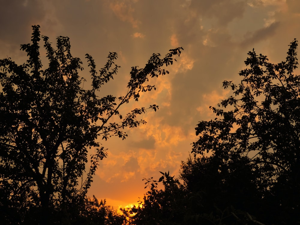 silhouette of sunset trees