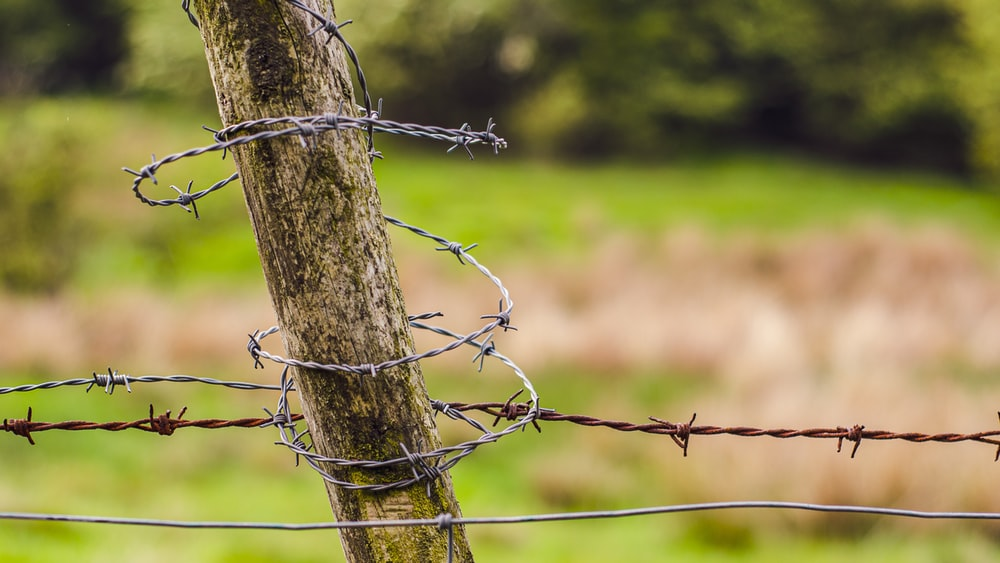 selective-focus photography of barbwire