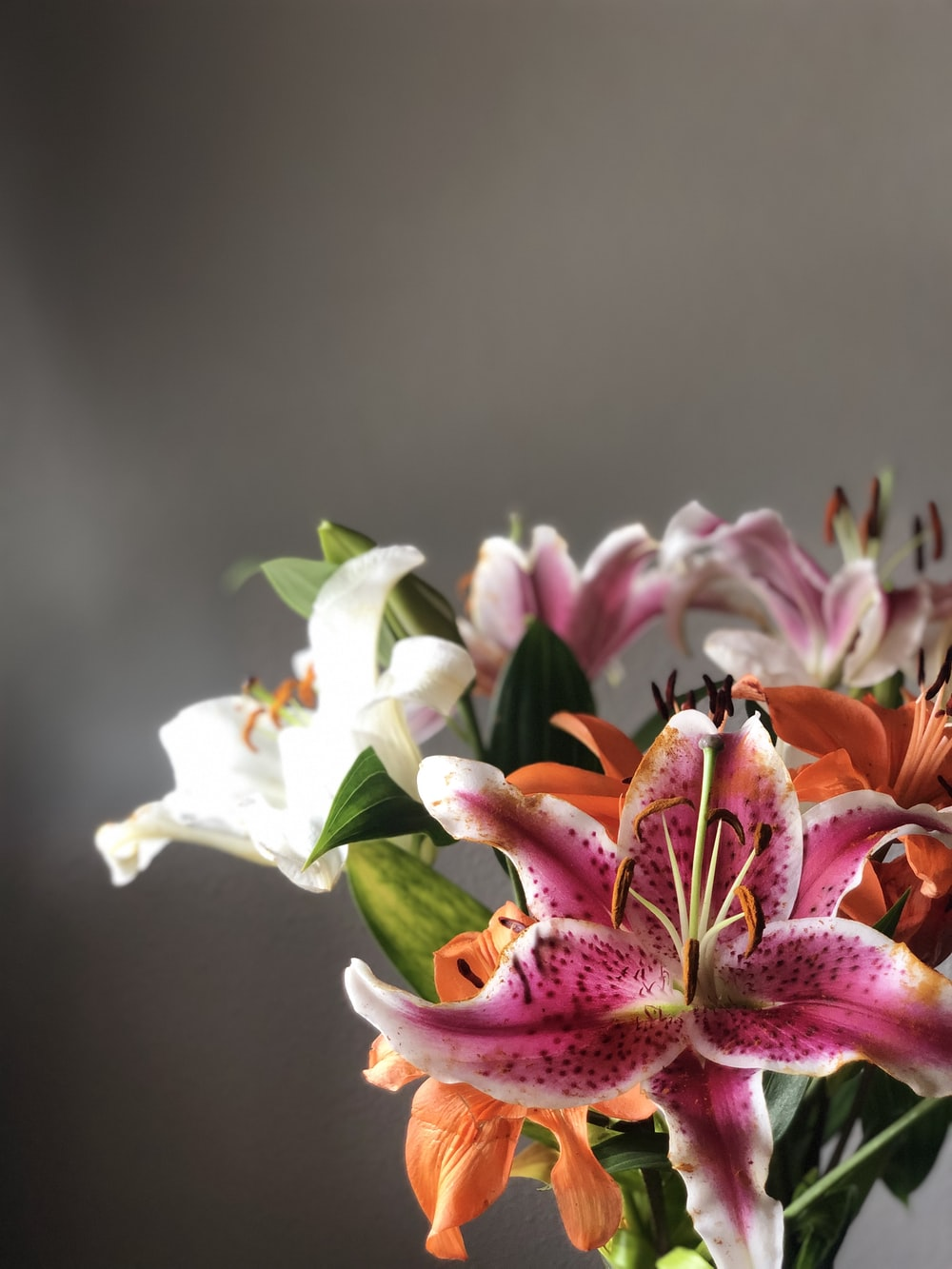 assorted-color lily flowers