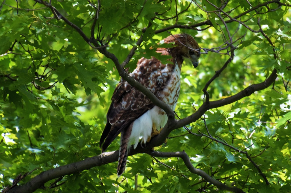 brown and white eagle on tree