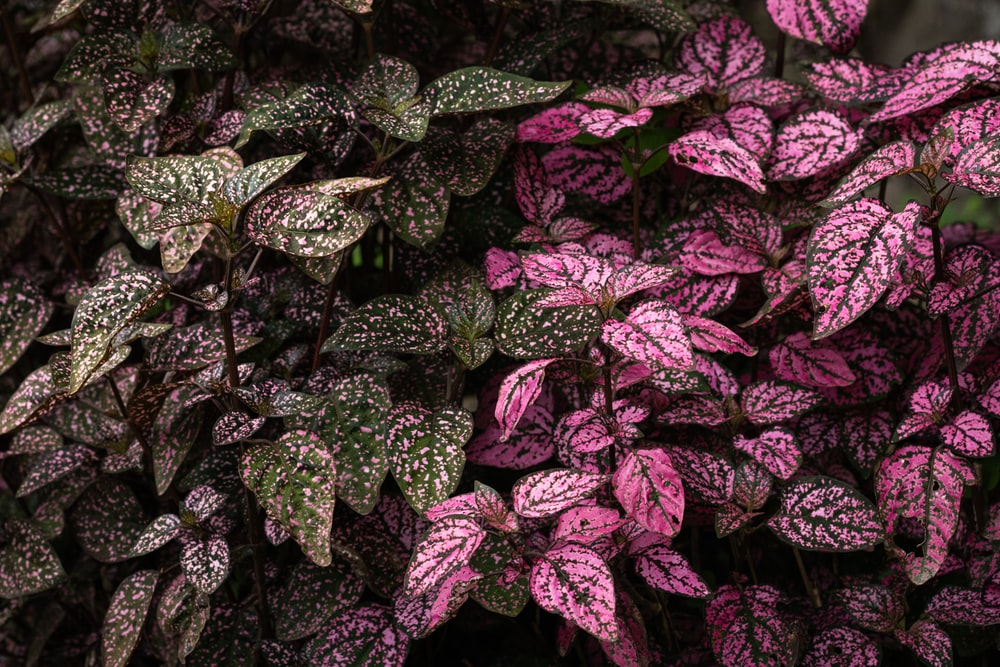 green and violet leafy plants