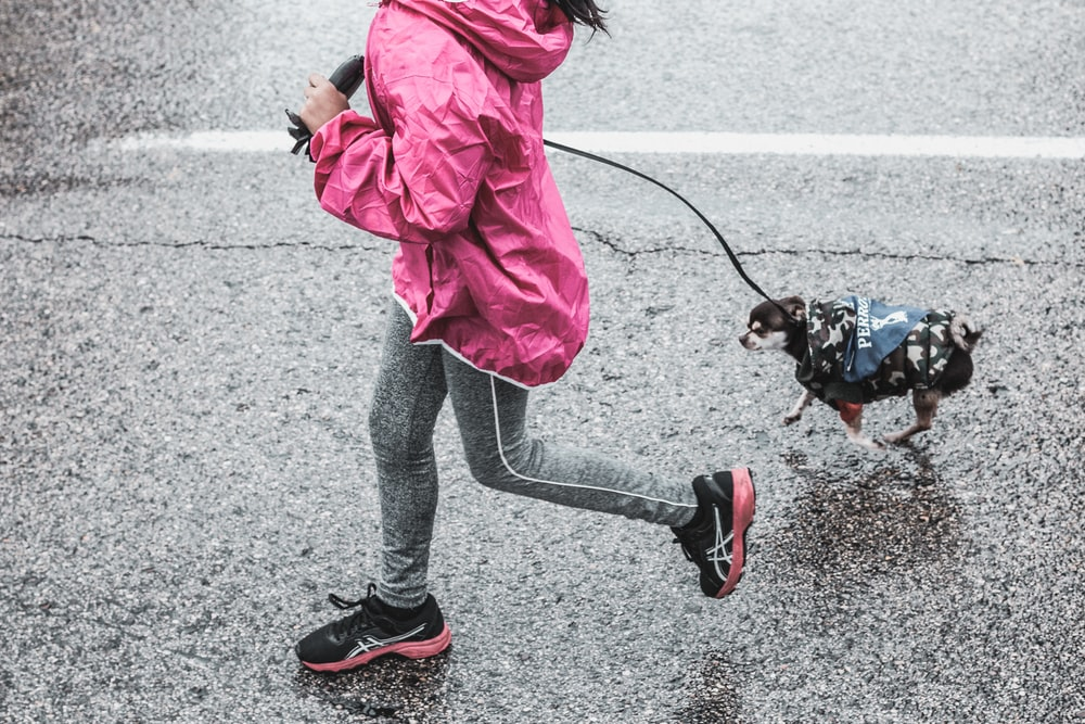 girl holding leash during daytime
