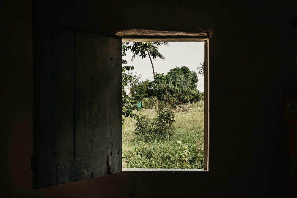 opened wooden window with tree and grass field view