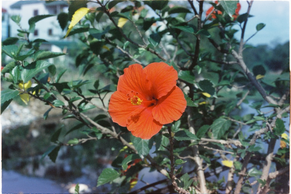 shallow focus photo of red flowe