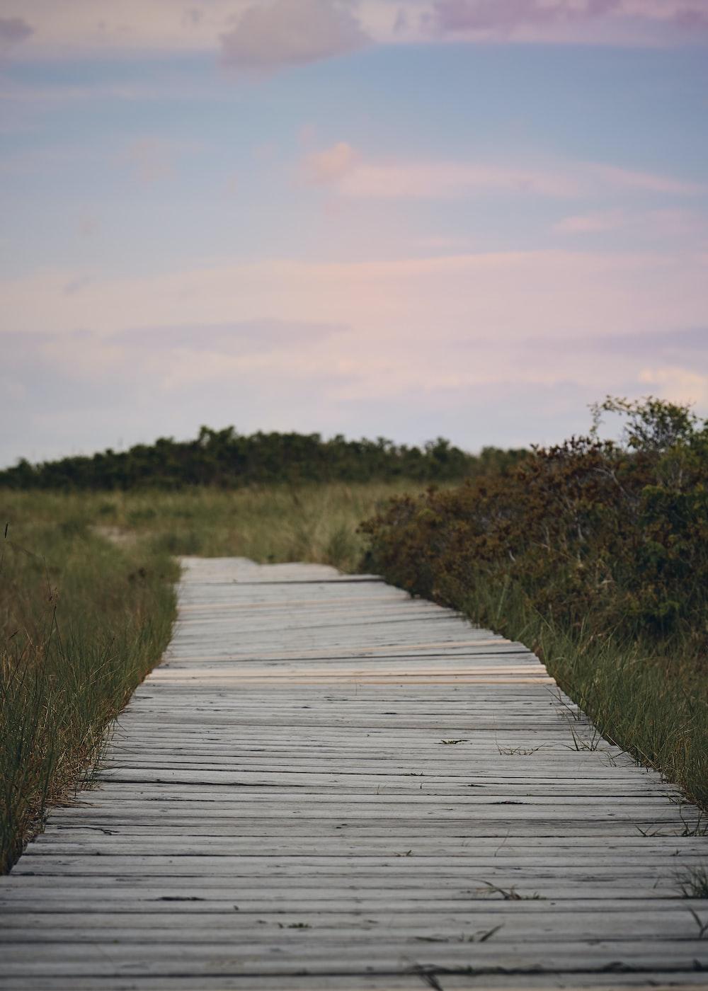 white wooden pathways besides grass