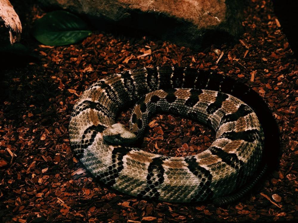 brown and black python photo