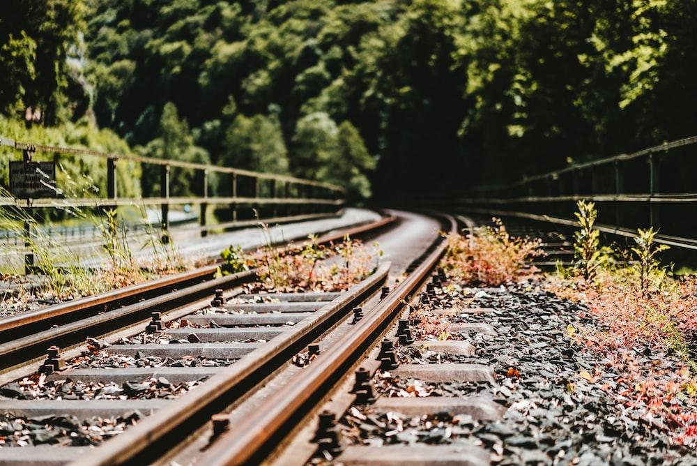 shallow focus photo of plants near train rail