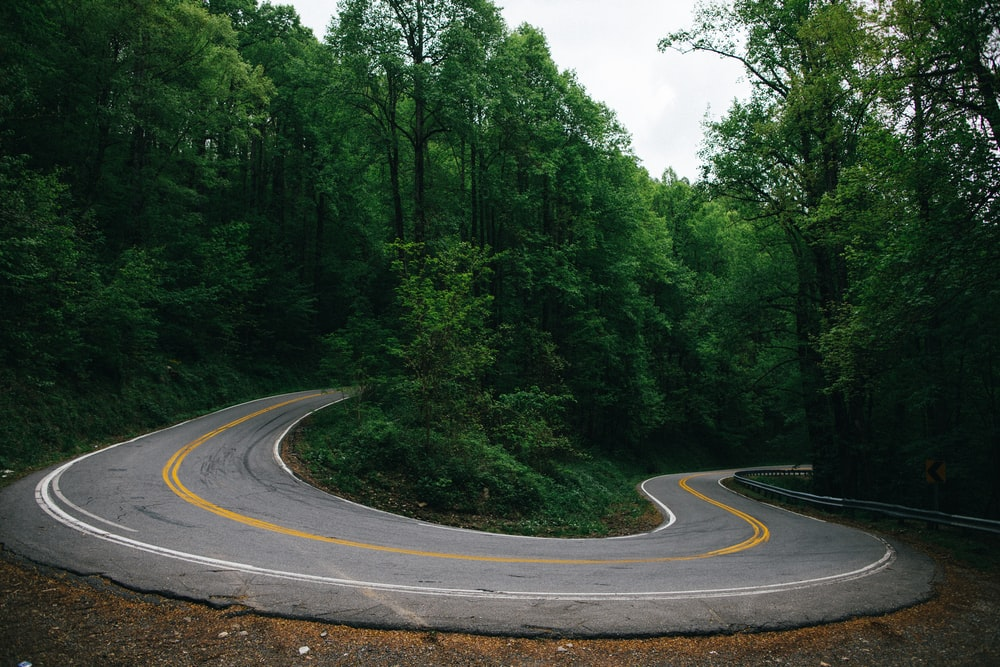 winding road surrounded by trees