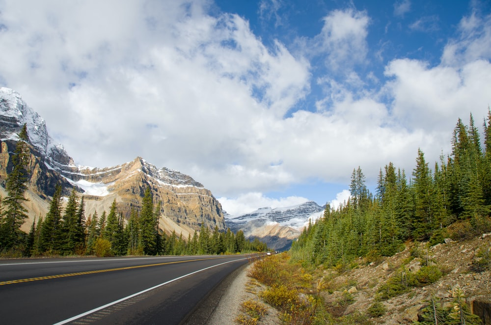 asphalt road and pine trees scenery