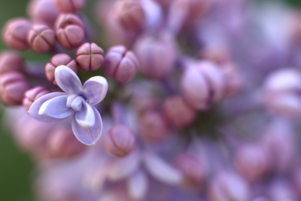selective focus photo of lilac flower