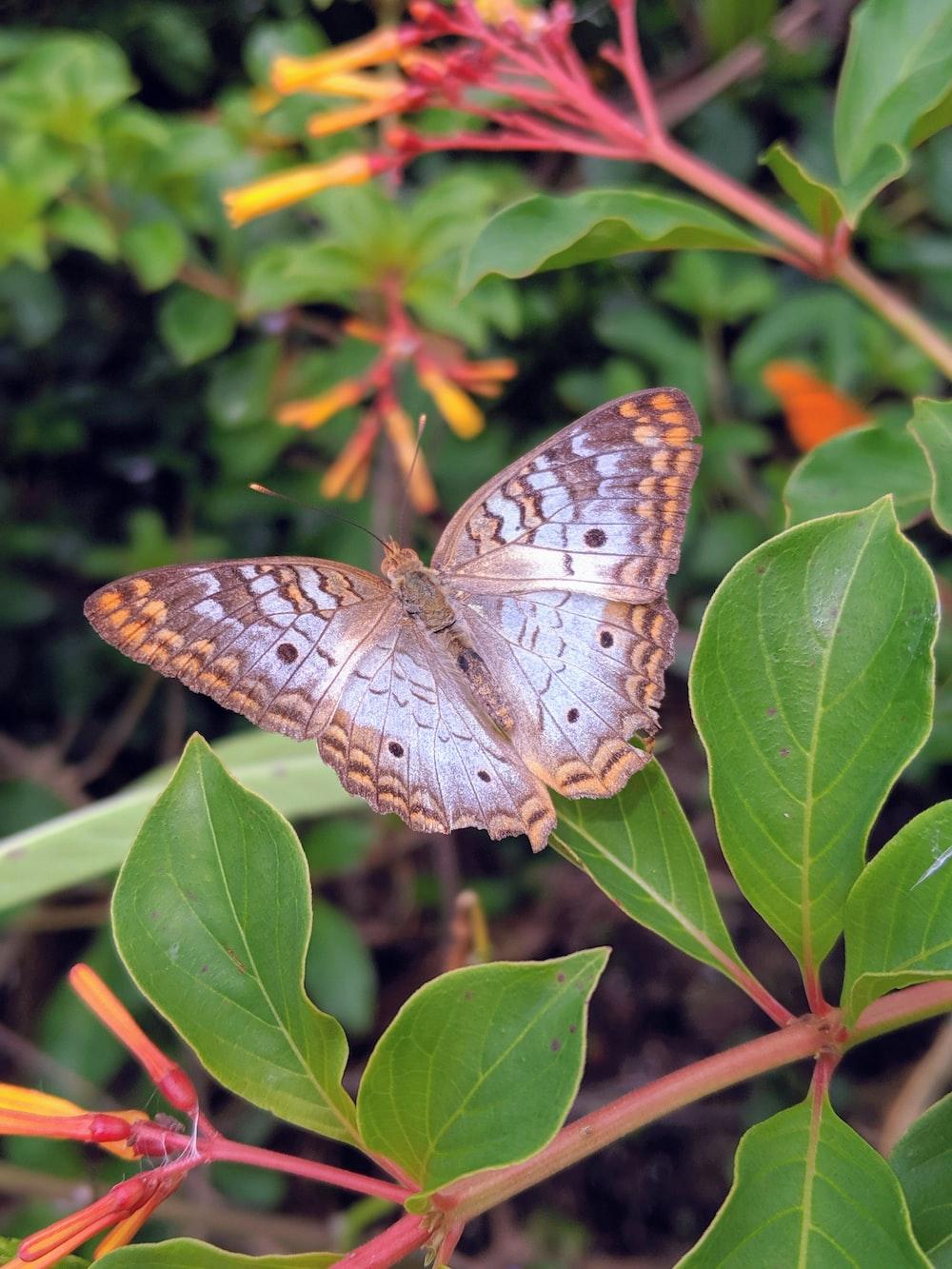 orange and gray moth