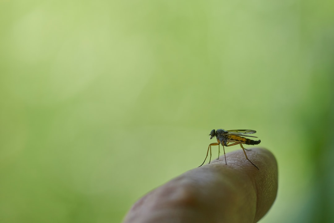 A robber fly rast on my finger