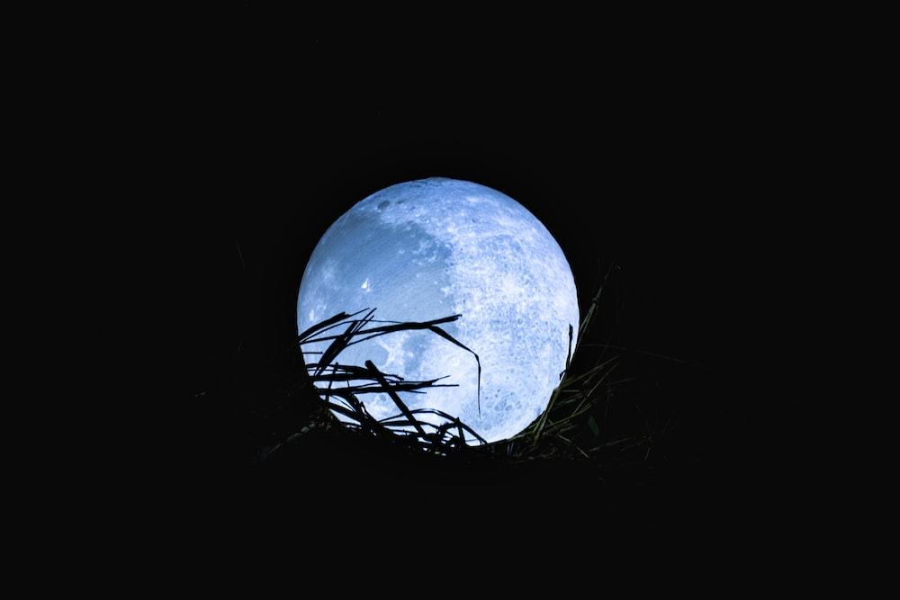 silhouette of grass under moonlight
